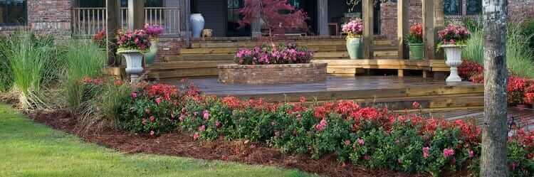 Planting Encore Azaleas in the Landscape
