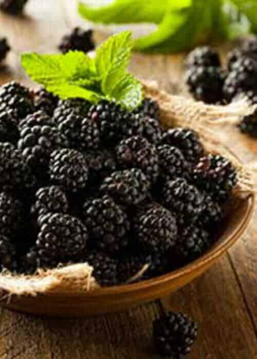 Navaho Thornless Blackberry-berries
